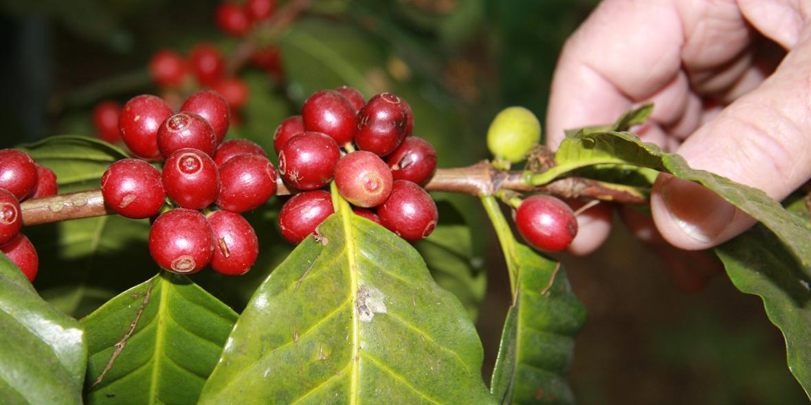 KaffeeHand