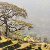 Terrassen bei Pokhara Nepal